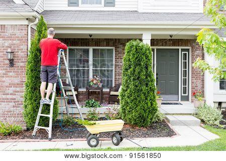 Yard Work Around The House Trimming Thuja Trees