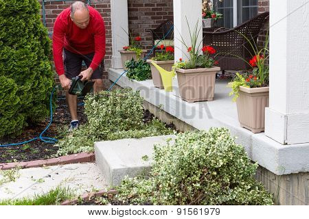 Gardener Trimming Shrubs In The Garden