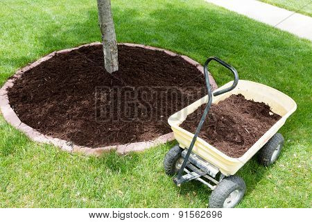 Mulch work around the trees growing in the backyard during springtime with a small yellow metal wheelbarrow full of organic mulch from the nursery standing alongside a round flowerbed around a sapling poster