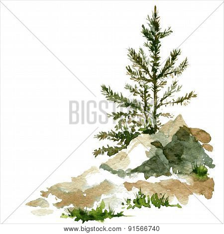 pine trees and rocks