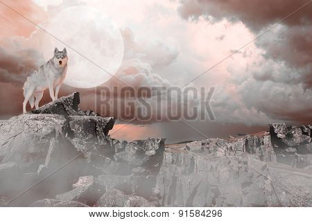 Wolf Standing On A Mountains