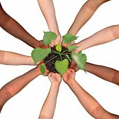 Community collaboration and cooperation concept and social crowdfunding investment symbol as a group of diverse hands organized in a circular formation nurturing a growing sapling tree as people coming together for success. poster