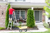 Yard work around the house trimming Thuja trees or Arborvitae with a middle-aged man standing on a stepladder using a hedge trimmer to retain the tapering ornamental shape poster