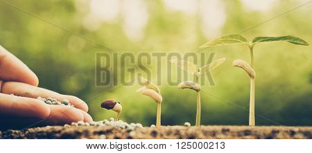 Hand nurturing young plants growing in germination sequence with chemical fertilizer poster