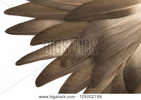Gray feathers close up on white background