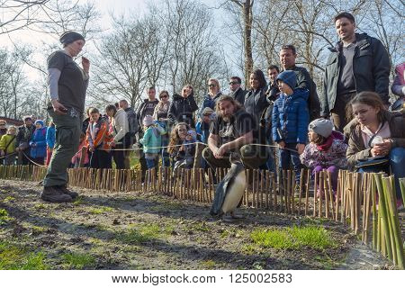 SZEGED HUNGARY - MARCH 20. 2016 - Penguin show in Szeged Zoo in the World Water Day event