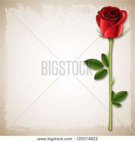 Vector Wedding Happy Valentine's Day background Single red rose on an old paper background