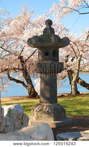 Japanese Style Birdhouse with Cherry Trees in the background in spring