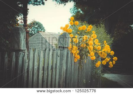 old wooden fence and yellow flowers filter