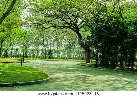 crisply evening sun and powerful luscious green trees in the park background