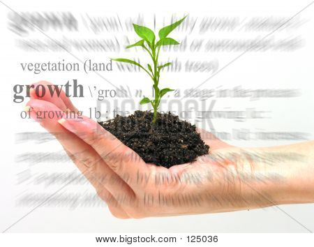 Growth Theme