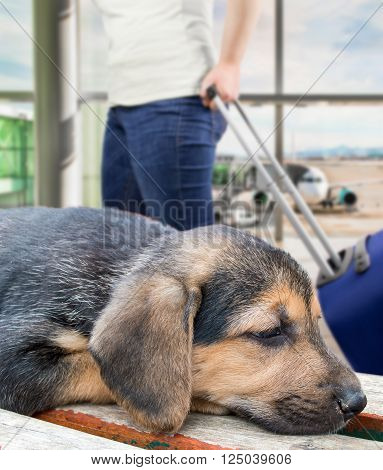 puppy dog forgotten at the airport because it is banned from flying with the pet by the pet policy