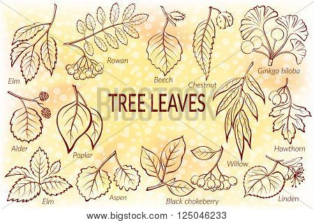 Set of Nature Pictograms, Tree Leaves, Willow, Hawthorn, Poplar, Aspen, Ginkgo Biloba, Elm, Alder, Linden, Rowan, Chestnut, Black Chokeberry and Beech. Eps10, Contains Transparencies. Vector