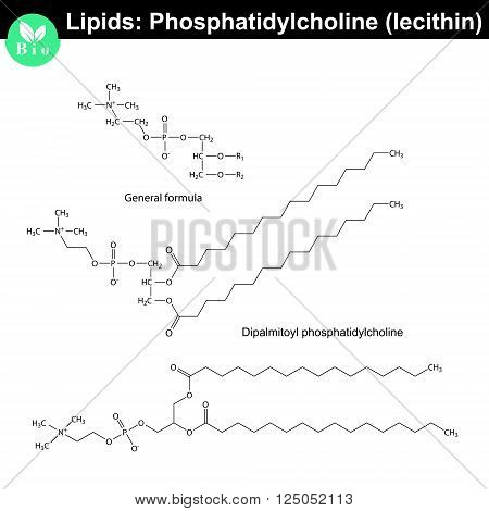 Lecithin molecular structure chemical formulas of lipids phosphatidylcholine molecule isolated on white background 2d vector eps 8