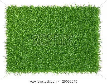 Green grass. natural background texture. fresh spring green grass.