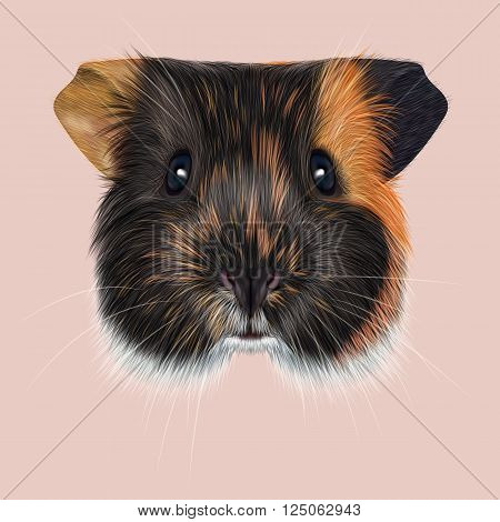 Cute fluffy tricolor face of domestic guinea pig on pink background