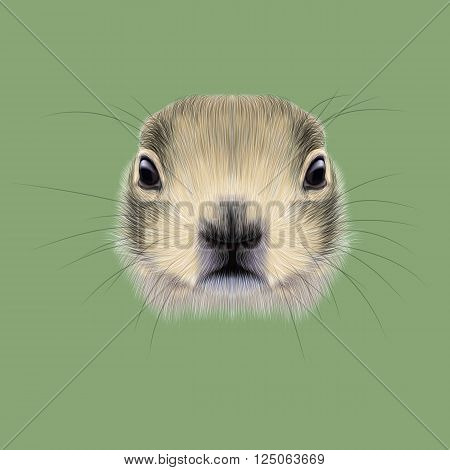 Cute face of meadow Rodentia animal on green background.