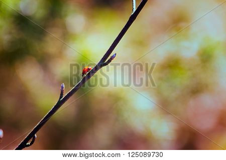 animal, april, awakening, background, beginning, bokeh, branch, bud, bush, close-up, color, cute, dots, flower, foliage, free, green, insect, ladybird, ladybug, leaf, legs, light, march, nature, outdoors, plant, red, spots, spring, summer, sun, sunlight,
