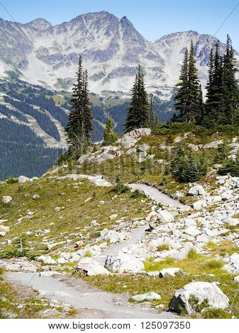Summer Hiking Trails on Whistler Mountain, British Columbia, Canada