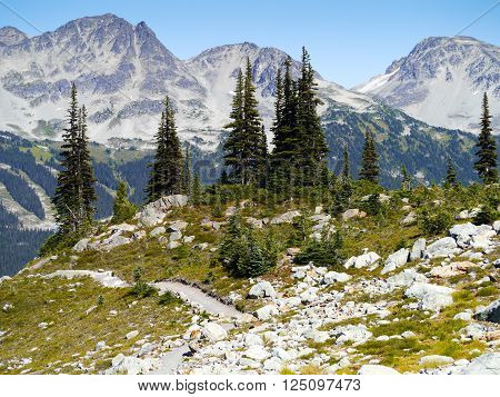Summer Hiking Trails on Whistler Mountain, British Columbia Canada