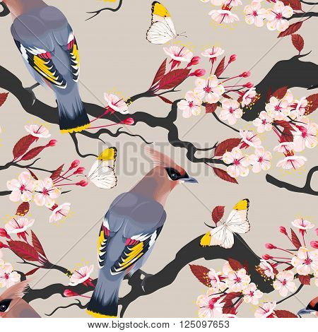 Waxwing on the cherry vector seamless background