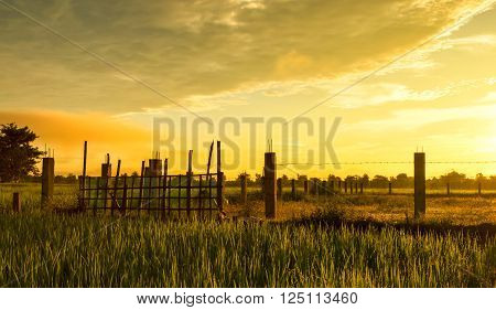 Barbed wire fence with rice paddy in the morning.
