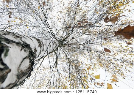 a park in the autumn, during cloudy weather, late autumn, ** Note: Shallow depth of field