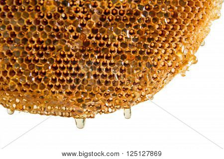 honeycomb with honey on the white background
