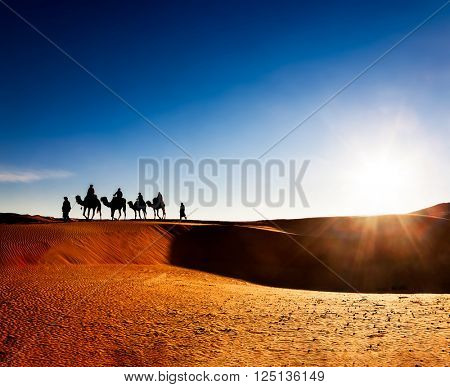 Exotic adventure: turist riding camels on sand dunes in desert at sunrise. Erg Chebbi, Morocco, Africa.