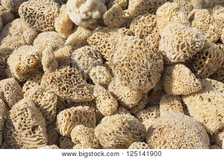 A closup of a natural sponges in Greece