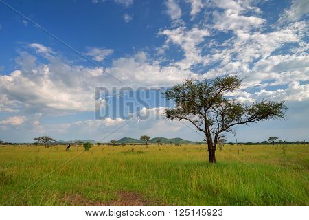 Scenic African savannah landscape with drammatic sky