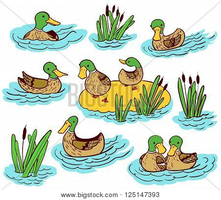 Doodle vector line art illustration set with ducks and reed on water
