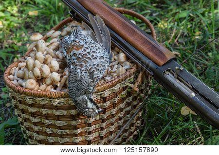 game bird mushrooms in a basket and a shot-gun