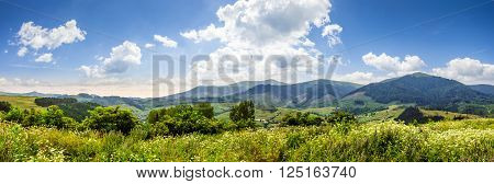 mountain rural landscape with wild flowers on meadow