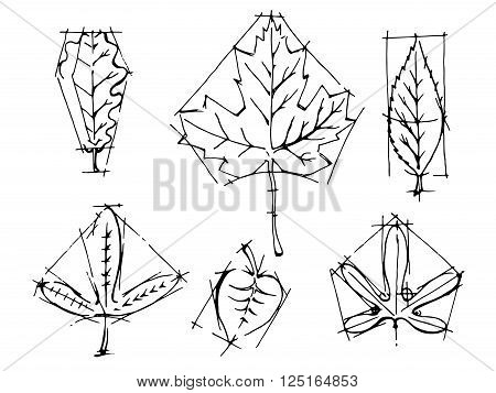 Collection of leaves. Black and white hand drawn vector stock illustration