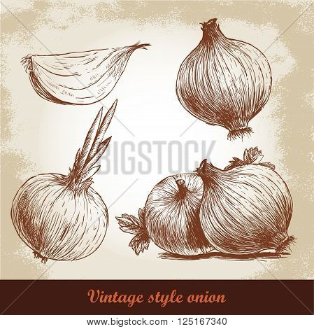 Onion hand drawn set. Bulb onion and quarter onion. Vintage retro background with hand drawn sketch onions. Spices vector illustration