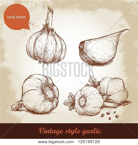 Vector hand drawn garlic set. Vintage retro background with hand drawn sketch garlics. Vector illustration