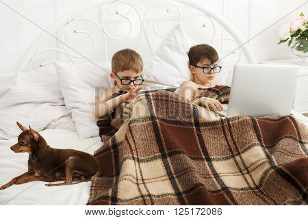 Two children, boys in parents' bed at morning with laptop and tablet. Brothers play computer games. Siblings and gadgets. Boys and pet, chiwawa or chihuahua dog in bed. Children in computer glasses.