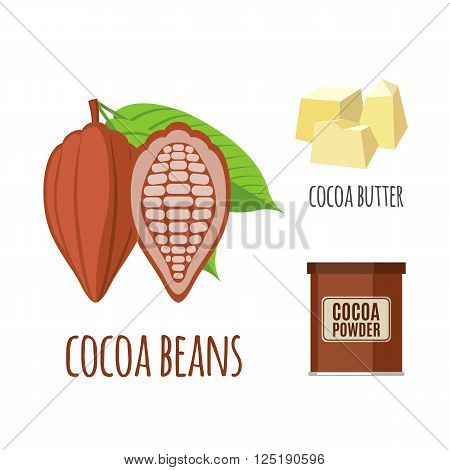 Superfood cocoa set in flat style: cocoa beans, powder, butter. Organic healthy food. Isolated objects on white background. Vector illustration