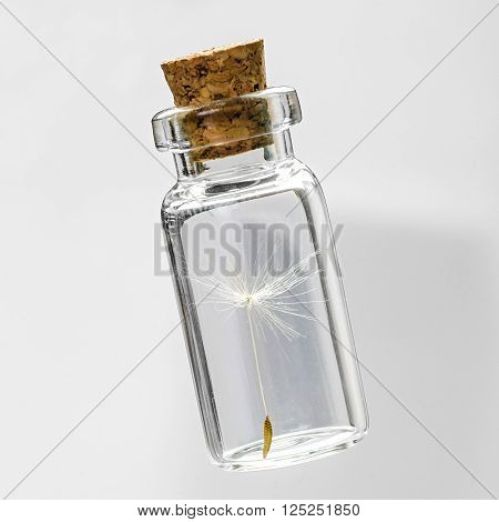 dandelion seeds in small glass bottles with gray background,  safeguard concept