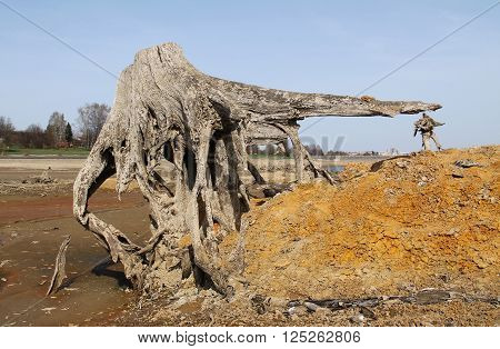 bizzare stumps of dead trees with revealed roots on the bottom of drying pond