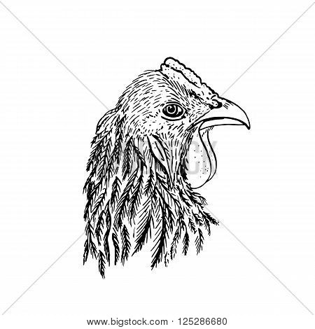 head of chiken, hand drawn roosters head, artistic ink drawing illustration of fowl