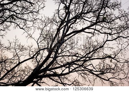 branches of a tree against sky in the evening.