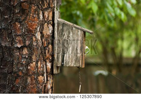 Bird house on a tree trunk in a house in Houston, Texas