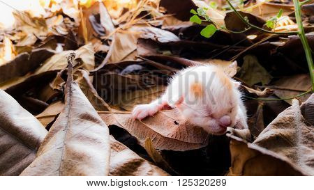 Abandoned newborn kitten on beautiful autumn foliage