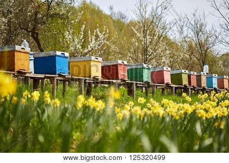 A row of bee hives in a field of flowers with an orchard behind