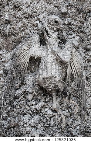 Dead burnt pigeon skeleton in grey ash pile
