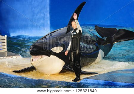 MIAMI US - JANUARY 24, 2014: Lolita the killer whale at the Miami Seaquarium. Founded in 1955 the oldest oceanarium in the United Statesthe facility receives over 500000 visitors annually
