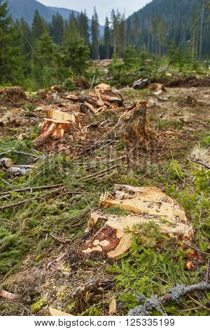 Deforestation In Romania