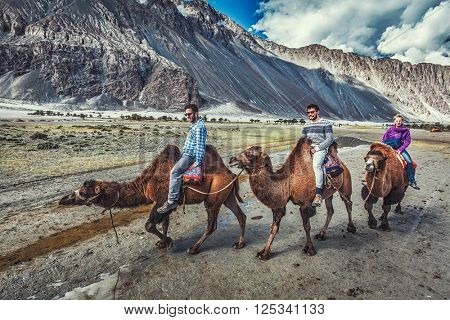 HUNDER, INDIA - SEPTEMBER 11, 2012: Western tourists riding camels in Nubra valley in Himalayas, Ladakh
